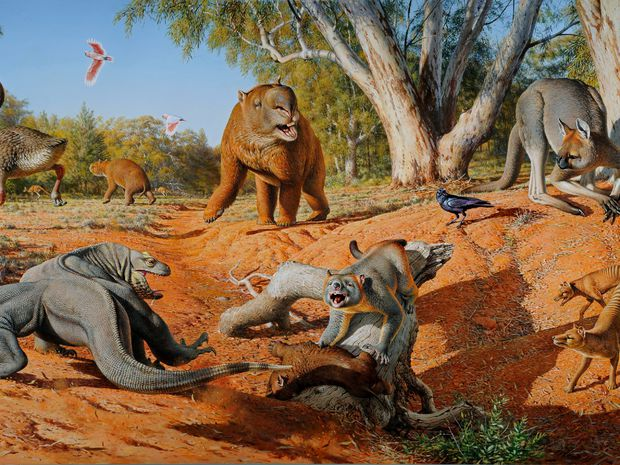 megafauna, Austrália, príroda, zvieratá, kengura, vombat, vtáky