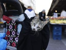 mačka, ruksak, trhovisko