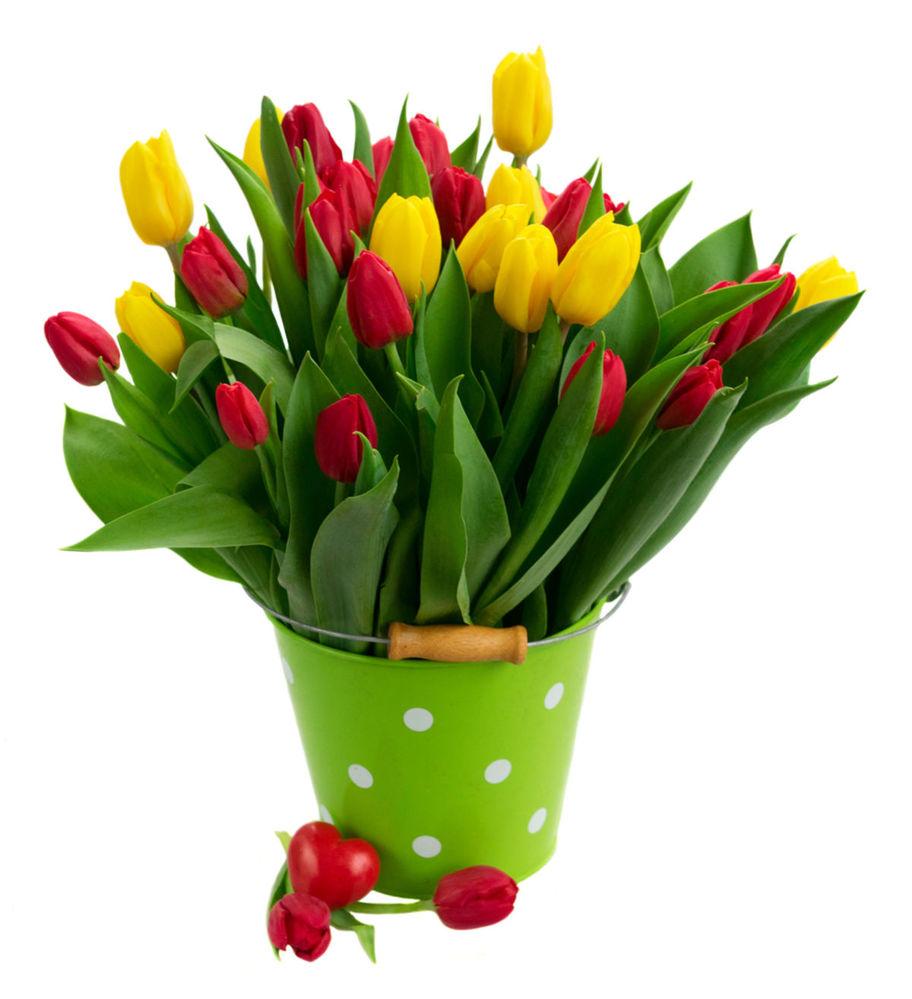 Z tulipánov dokážete vytvoriť nádhernú a bohatú kyticu hýriacu farbami. Ak si ju postavíte na stôl napríklad v bodkovanom dekoratívnom vedierku, máte jar priamo v kuchyni na stole.