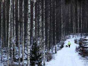 Fínsko, zima, sneh, pes, venčenie, mráz