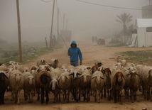 Gaza, pásmo Gazy, pastier, stádo, ovce