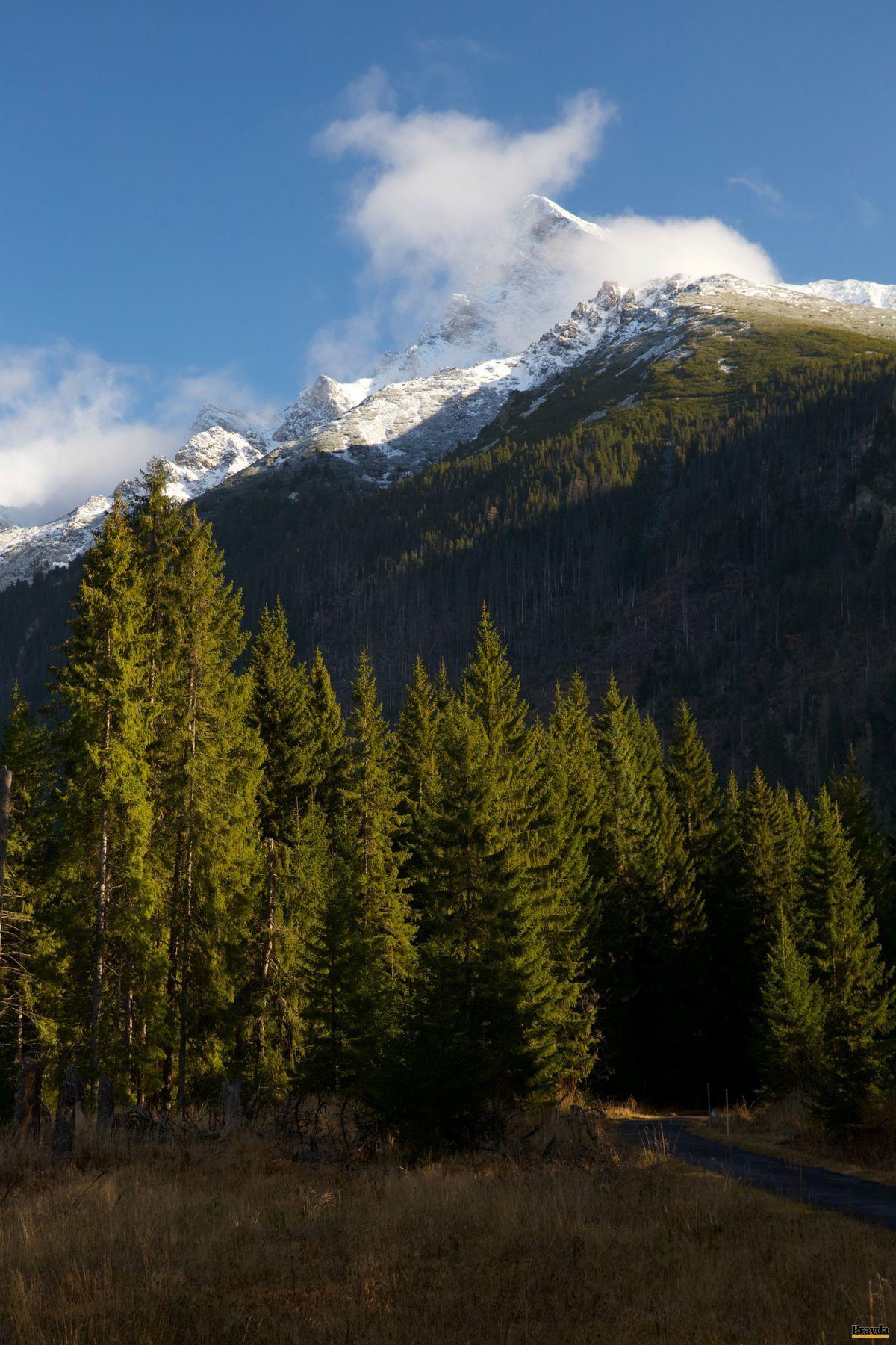 Vo vlastníctve štátu je dnes 774-tisíc hektárov, teda takmer 40 percent výmery lesov.
