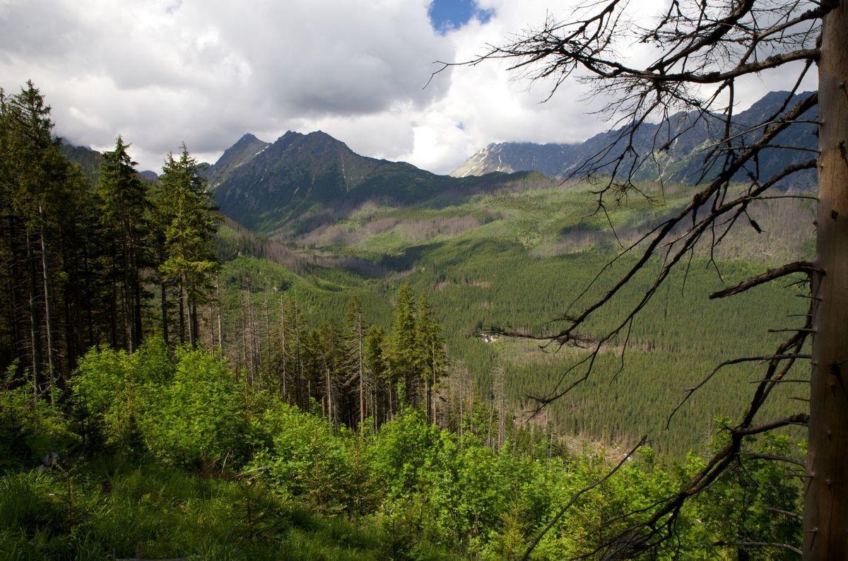 Lesník Tomáš Bucha tvrdí, že výmera lesných pozemkov od roku 1950 stúpla z 1,77 milióna na 2,01 milióna hektárov.