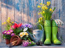 jar, záhrada, príroda