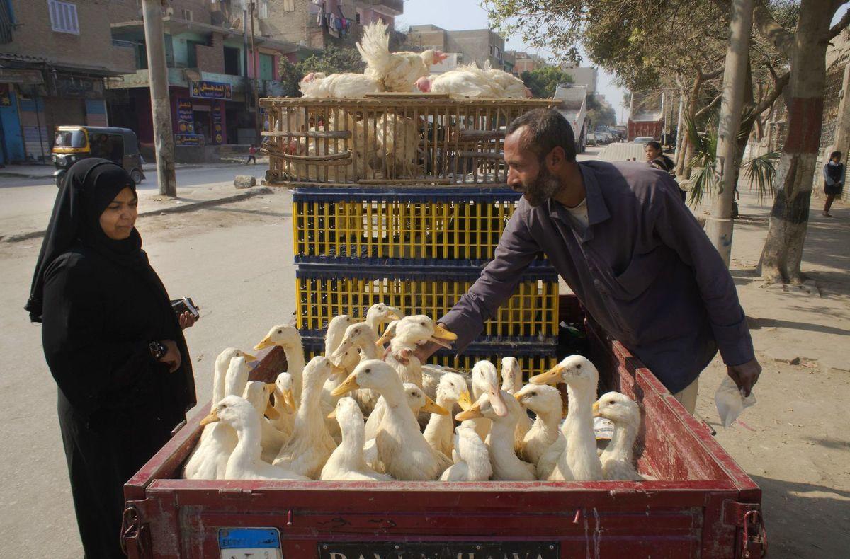 Egypt, kačky, trh