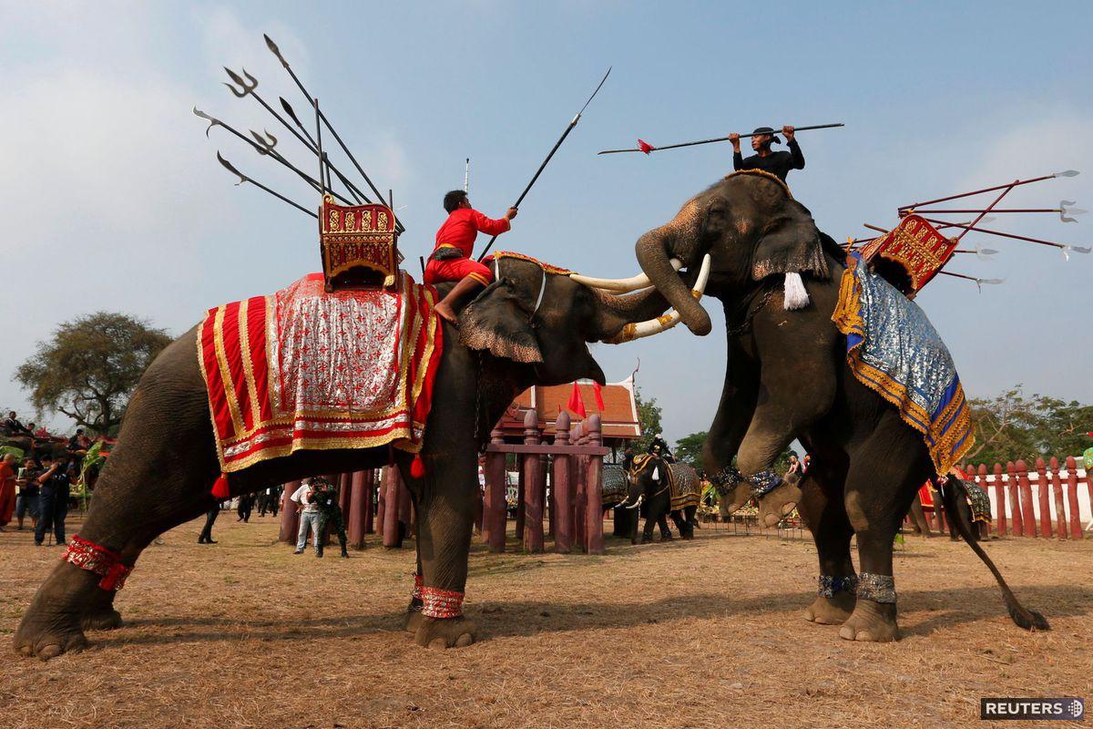 slony, Thajsko