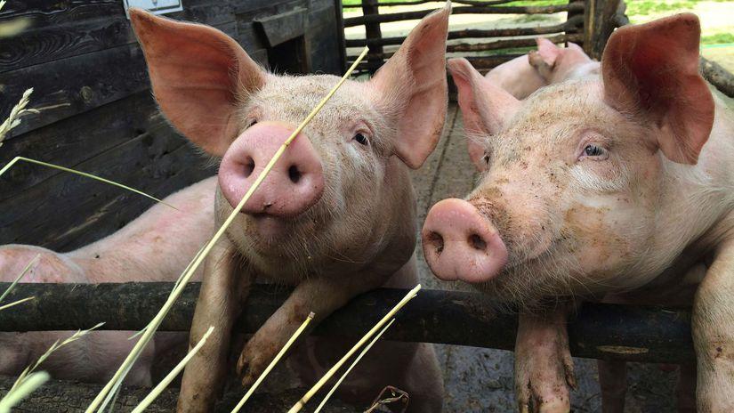 2ebce49e2 Sú Slováci takí bohatí, aby kupovali lacné mäso? - Ekonomika - Správy -  Pravda.sk