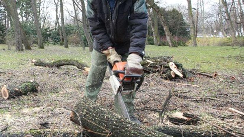 Výrub stromov, pílenie, ťažba dreva