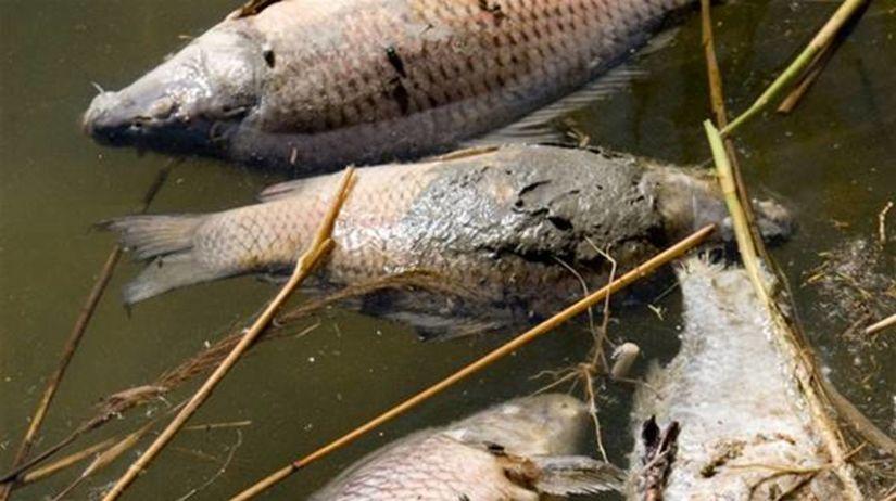 Mŕtve ryby