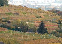 Vidiek, vinice, vinohrad