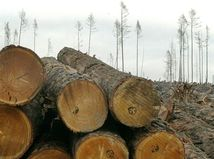 Kalamitné drevo