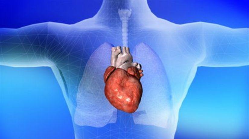hrudník - srdce