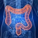ľudské telo - črevá