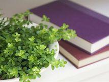 rastlina a knihy