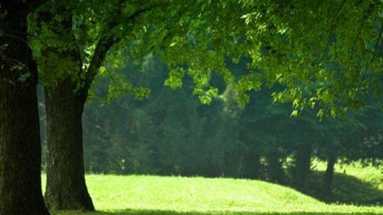 park - zeleň - príroda