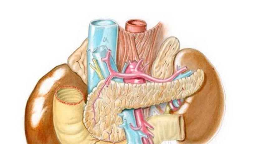 pankreas - podžalúdková žľaza