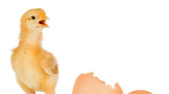 ilustračné foto vajce sliepka vajcia