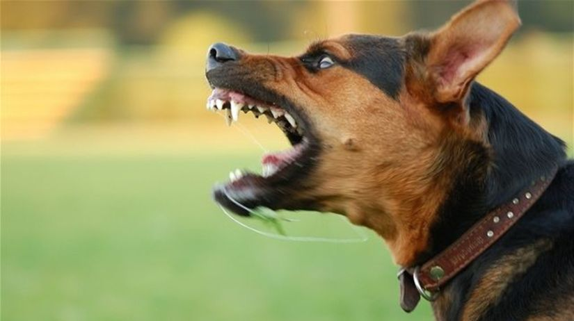 pes, vlčiak, besnota