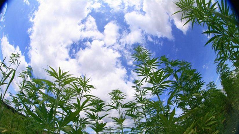 marihuana, droga, drogy, ľahké drogy, canabis