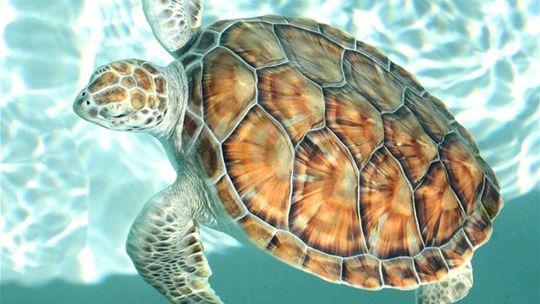 V nitrianskej Botanickej záhrade SPU bude výstava Svet korytnačiek