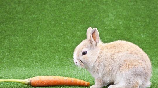 zajac, mrkva, zelenina