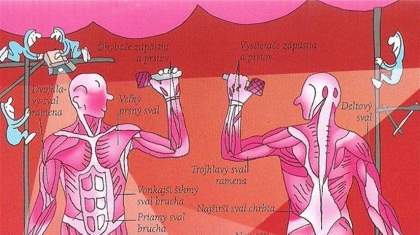 Kostrové svaly - ilustrácia
