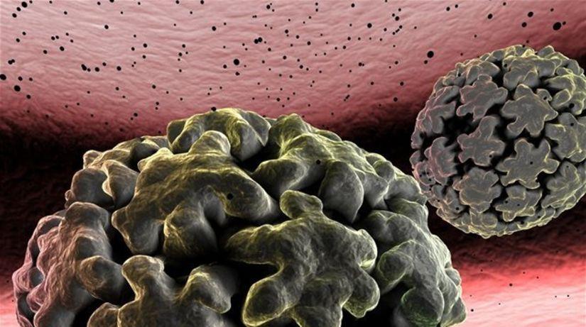 HPV vírus, papilomavírus