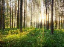 les, urbár, urbariát, drevo, park, stromy, strom