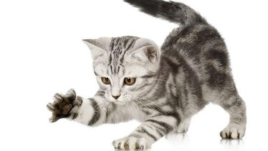 mačka, mačička, mačiatko