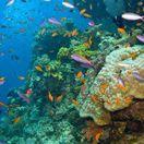 korálový útes, more, ryby