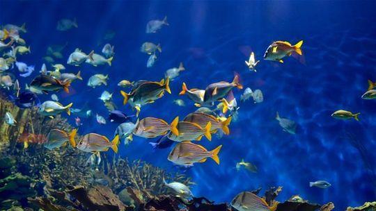 Under je podmorská reštaurácia - prvá v Európe, najväčšia na svete. Menu za 230 €