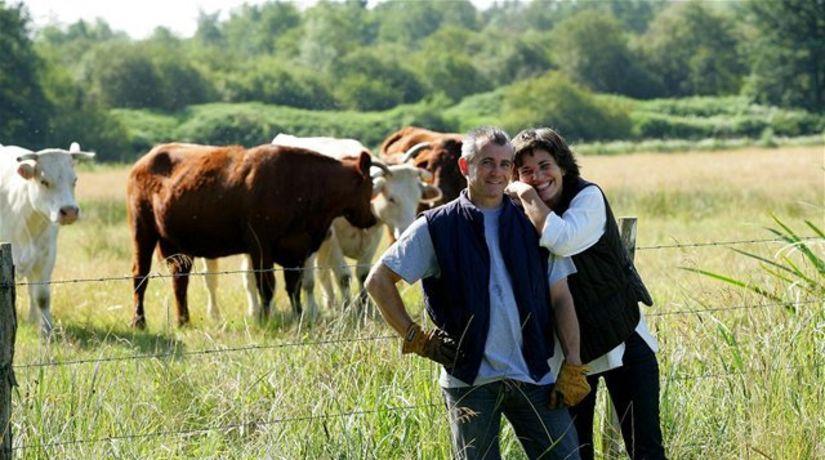 farmár, pôda, pozemok, krava, kravy
