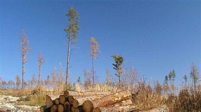 Vysoké Tatry, drevo, les, kalamita, stromy