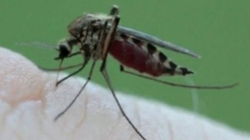 A zasa útočia komáre! Ako na ne?