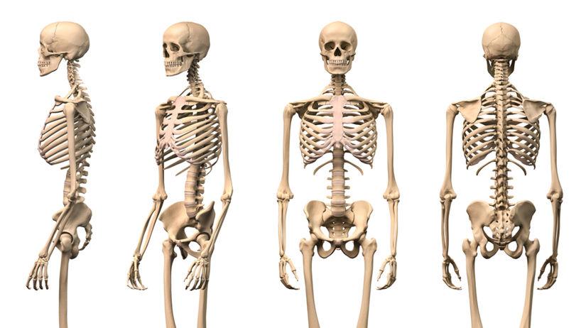 kostra, kosť, kosti