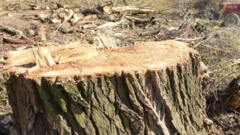 vyrúbaný strom, kmeň, drevorubač
