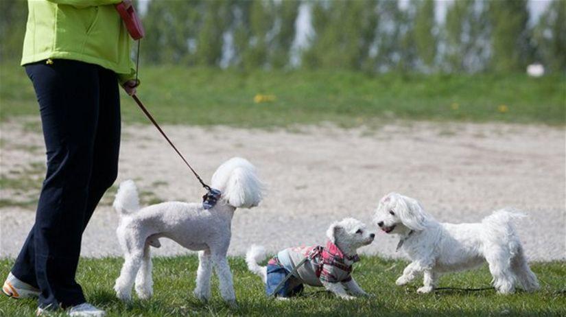 Venenie psov a strenie zvieratiek