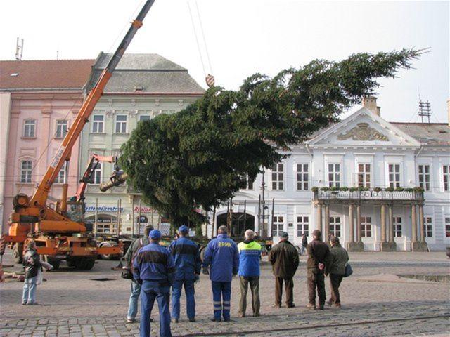 Vianoce, vianočný strom, Košice