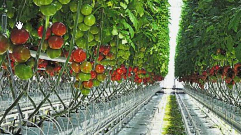 Nováky, paradajky