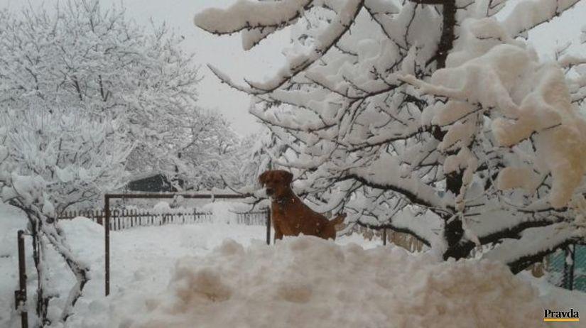 pes, sneh