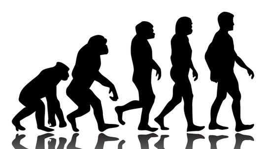evolučná teória