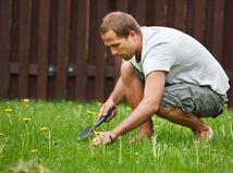 Tráva, záhrada, trávnik, údržba, bývanie
