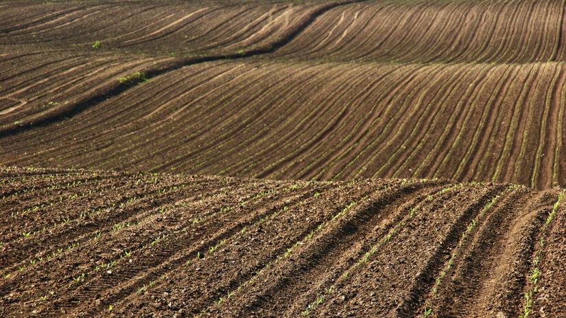 pozemok, pôda, pole, družstvo