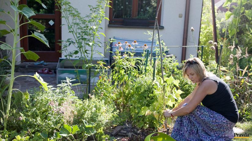 Záhrada, Ivanka pri Dunaji