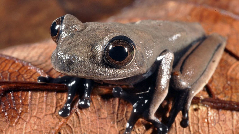 Surinam prales dažďový druhy živočíšne nové