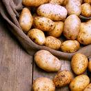 zemiaky, úroda