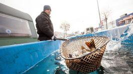 Ryby v stopách bravčového, potraviny zdraželi jedna po druhej