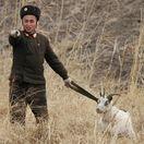 vojak, koza, KĽDR, Severná Kórea