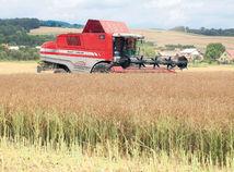 žatva, kombajn, pšenica, obilie
