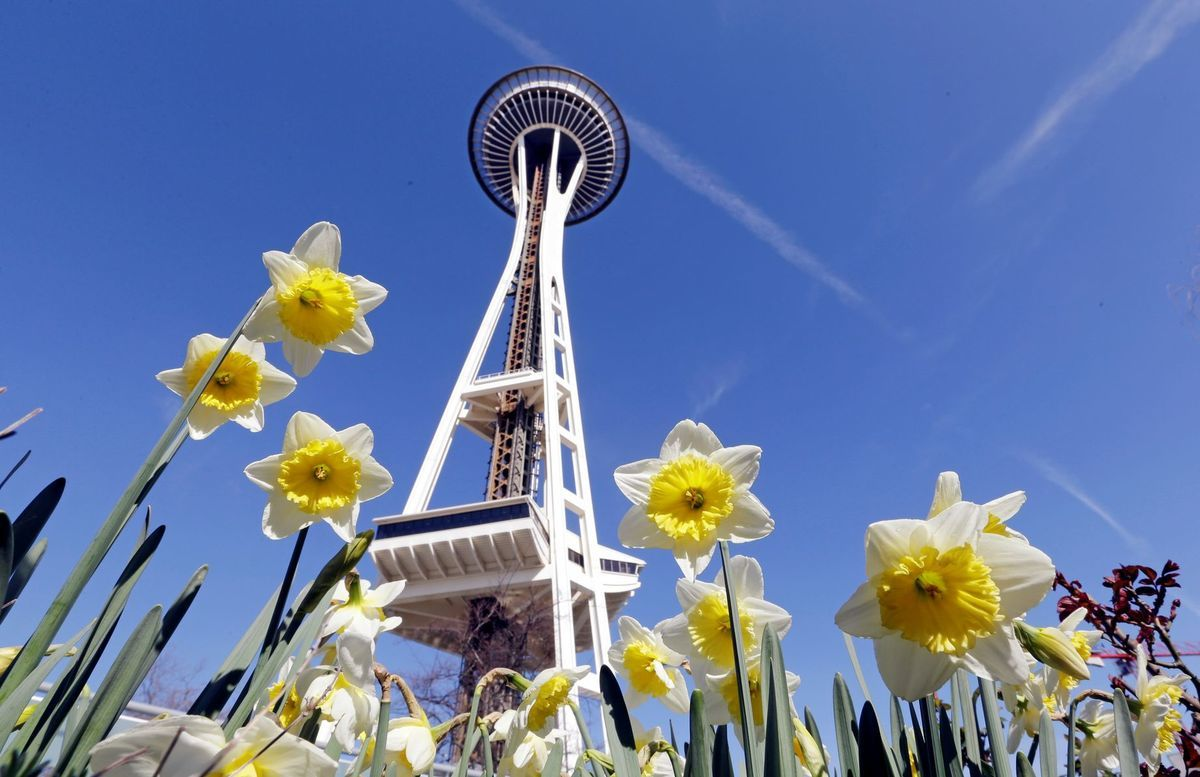 Seattle, narcis
